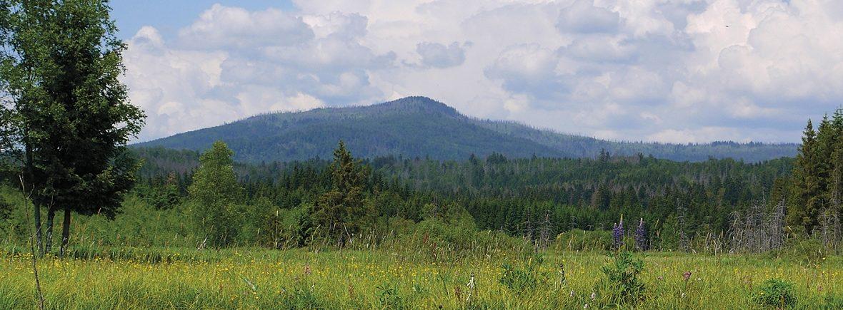 Blick auf den Rachel im Nationalpark Bayerischer Wald