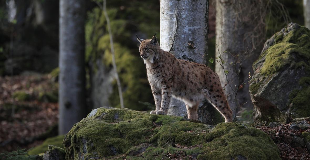 50 Jahre Nationalpark Bayerischer Wald